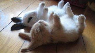 按照预言,成百上千的兔子将在今天陷入沉睡