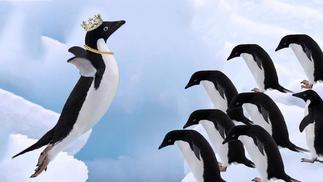 PenguinGo!