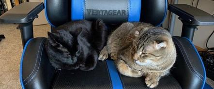 猫为什么要霸占你的游戏电竞椅?