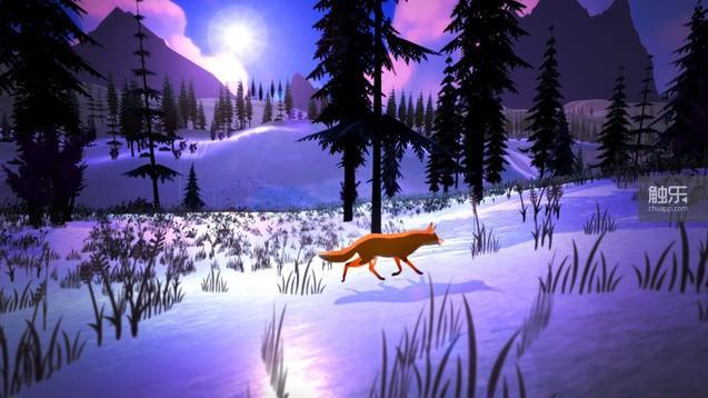 月光下的狐狸